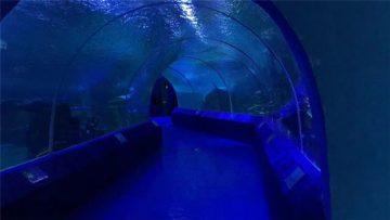 180 aŭ 90 Grado Akrilaj Paneloj por Akvario-Tunelo