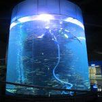 Klara akrila cilindro Granda fiŝujo por akvarioj aŭ oceana parko