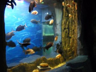 2018 Supro Superkvalita Akrila Panelo por akvaria fenestro