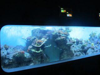 Artefarita Rolita Akrila Cilindra Travidebla Fiŝo Akvario / Vidanta fenestron