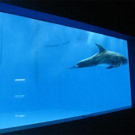 Alta kvalito Granda akrila akvario / naĝejo fenestro subakva dika fenestraĵo