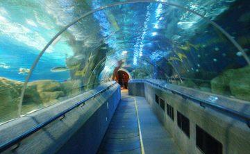 Akrila tunelo