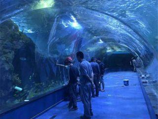 Akrila tunelo oceanaria projekto en publikaj akvarioj