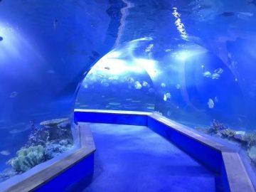 Klara pmma akrila Grandaj plastoj tunelo de akvario
