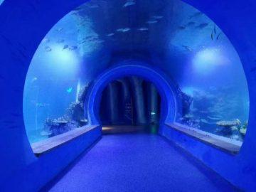 Alta klara granda akrila tunelo akvario de malsamaj formoj
